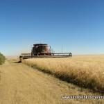 Kirschenman harvest 2011 Case IH 8120